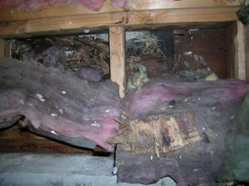 Mold Inspection Journal: 3-3-09